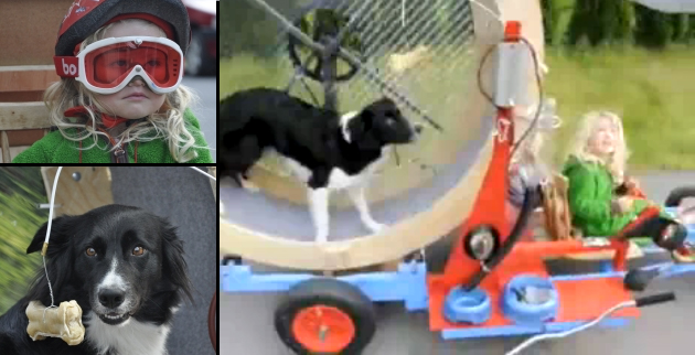 It's Friday! Border Collie + hamster wheel = go!  [w/VIDEO] thumbnail