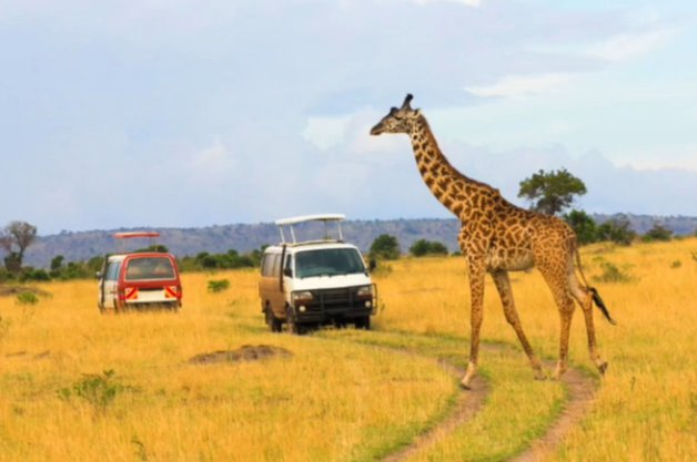 Ol Pejeta Conservancy wants to crowdfund a diesel hybrid safari vehicle thumbnail